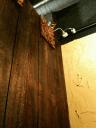 ラマイの壁の上から見下ろす猫